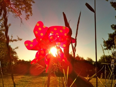 Sabine_Dinkel_Leuchtblume