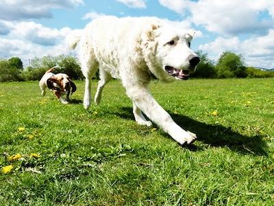 Keine Angst vor großen Tieren: Malte Klauck hat hier eindrücklich eingefangen, wie Wilma in Entenwerder ihr Unwesen treibt...