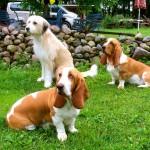 Hunde sind stets willkommen. Auch die der Teilnehmer.